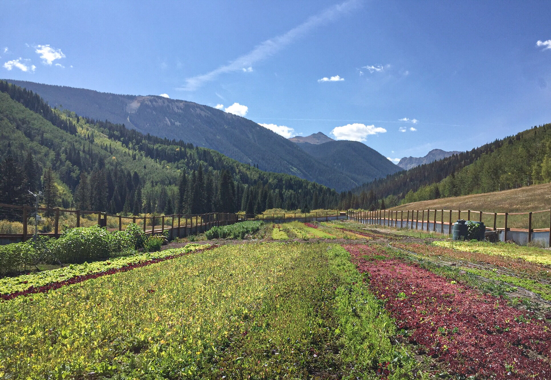 Knapp Ranch growing food